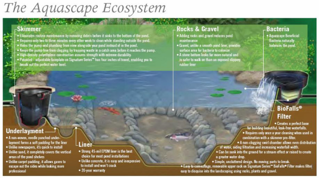 The Aquascape Ecosystem